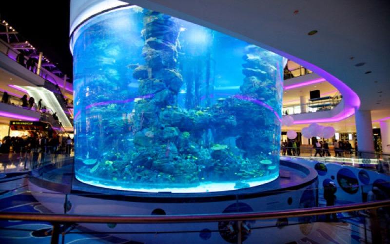 aquarium du morocco mall mort de plus de 2000 poissons. Black Bedroom Furniture Sets. Home Design Ideas