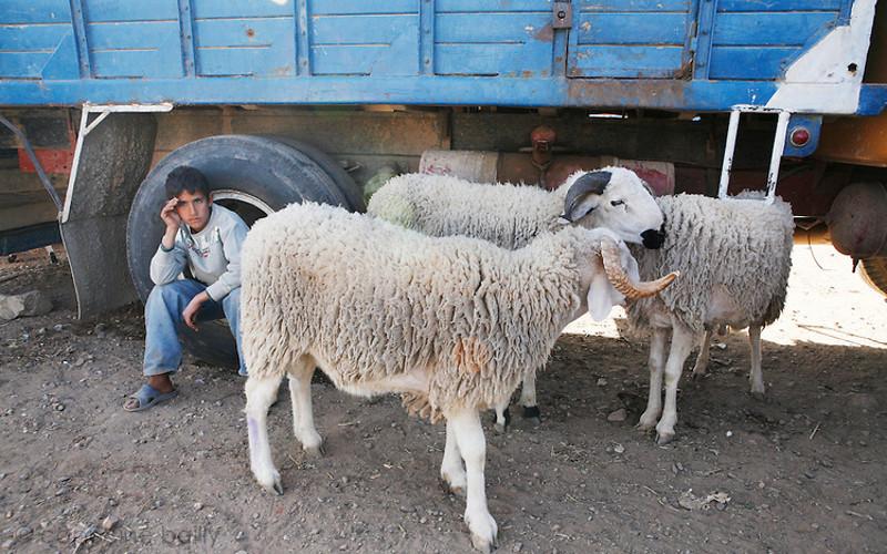 un homme tue son fr re pour un mouton jerrada. Black Bedroom Furniture Sets. Home Design Ideas