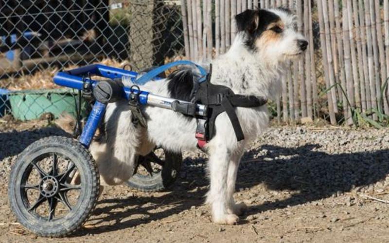 Il renonce son emploi en angleterre pour s occuper des - Jeux de chiens a s occuper ...