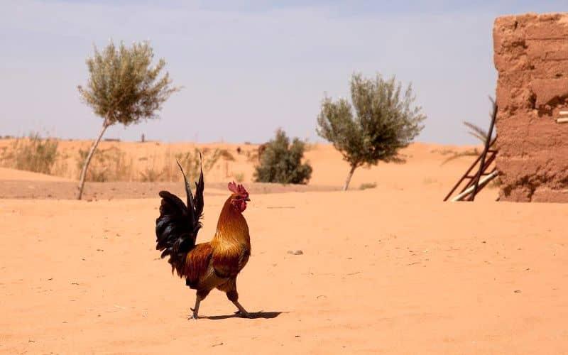 Jusqu'à 48 degrés prévus au Maroc